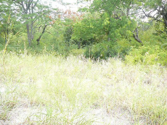 210 LARK Meadow Drive, Runaway Bay, Texas 76426