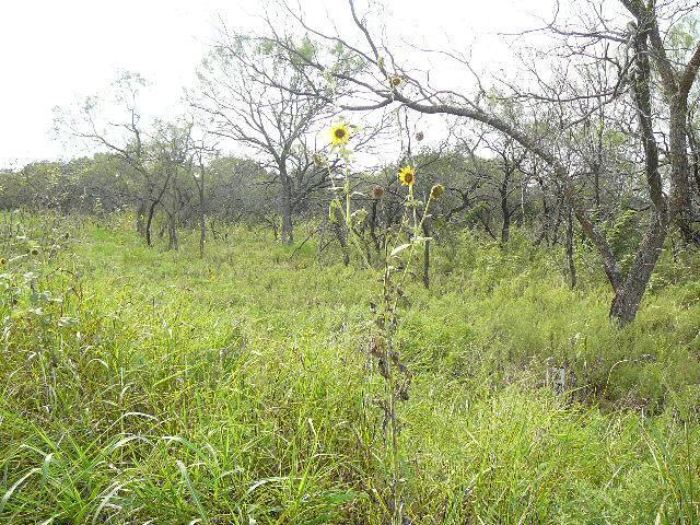 909 SHADY OAKS Drive, Runaway Bay, Texas 76426