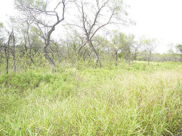 110 BLUEGRASS Court, Runaway Bay, Texas 76426