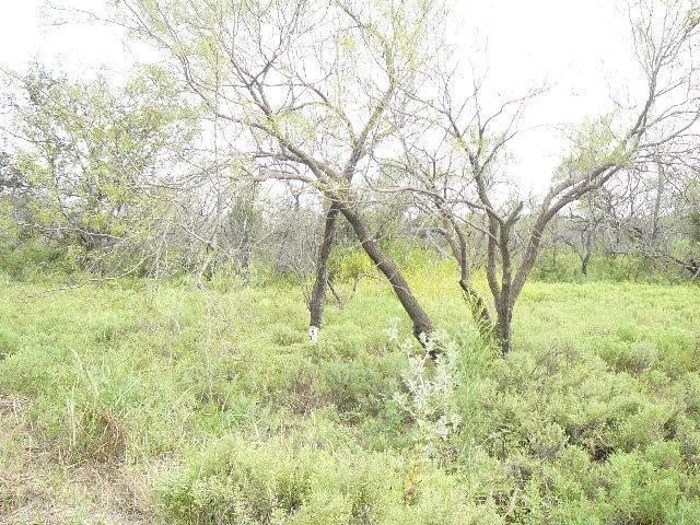325 Lark Meadow Drive, Runaway Bay, Texas 76426