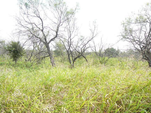 313 Lark Meadow Drive, Runaway Bay, Texas 76426
