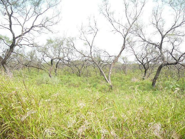 508 SLEEPY Meadow Drive, Runaway Bay, Texas 76426
