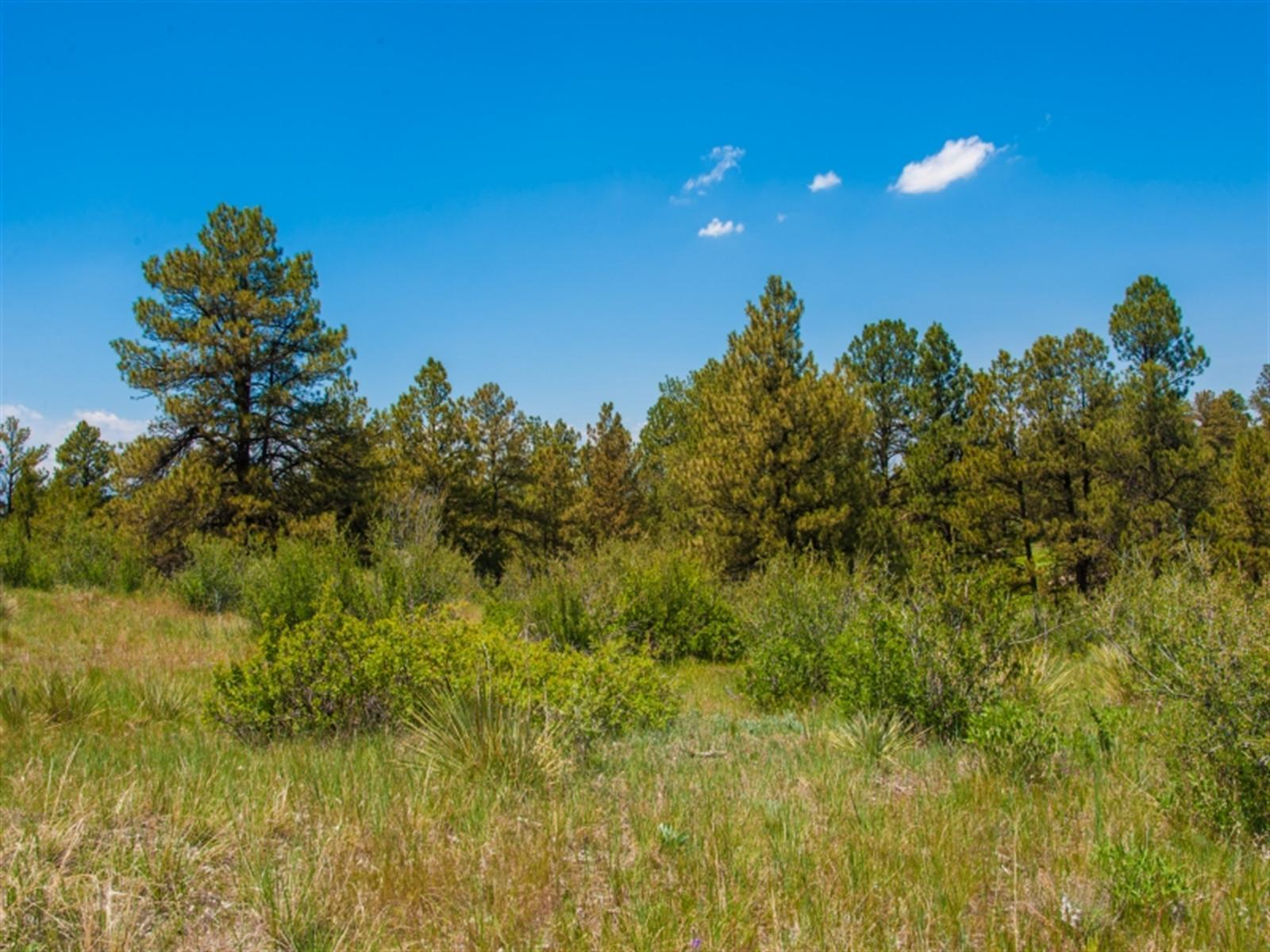 7998 Forest KEEP, Parker, CO 80134